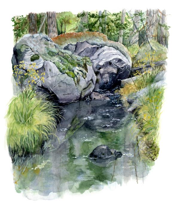 Miljöillustration som skildrar en bäck i Buxåsens naturreservat på naturreservatsskylt. Uppdragsgivare: Västkuststiftelsen