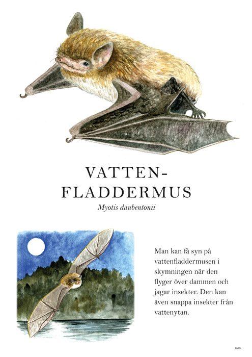 Skyltmaterial till Gräfsnäs slottspark, Illustration och formgivning: Kleo Bartilsson