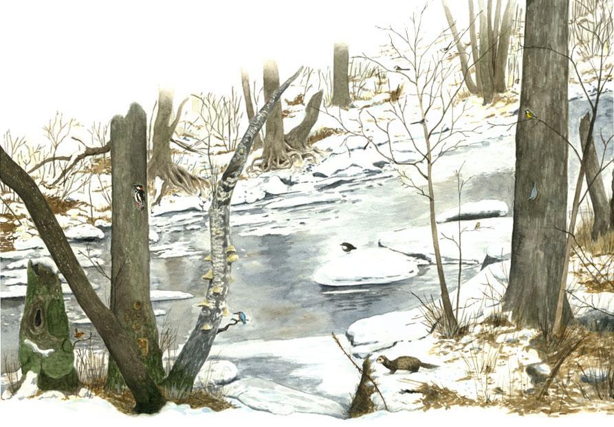Miljöbild som skildrar livet och arterna vid Råån under vintern. Illustration till projektet Naturpunkt Råån, uppdragsgivare Helsingborgs kommun.
