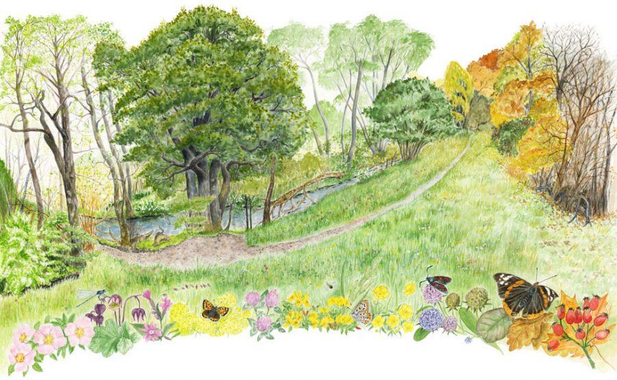 Miljöbild som skildrar livet och arterna vid naturpunkten vid Råån från maj till november. Illustration till projektet Naturpunkt Råån, uppdragsgivare Helsingborgs kommun.