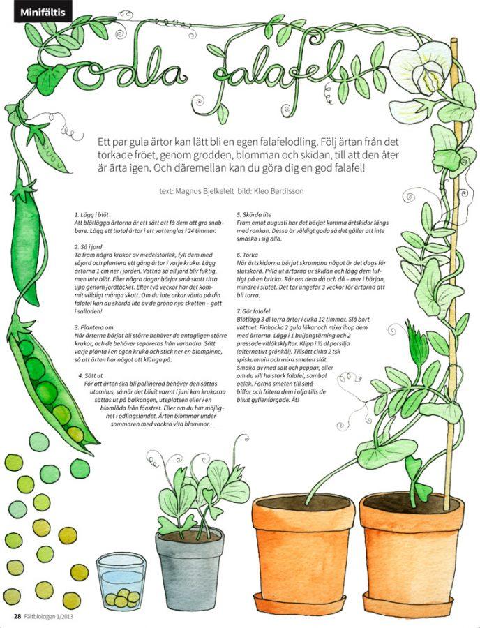 Sida i Fältbiologen 2013/1. Text och formgivning: Magnus Bjelkefelt, Illustration: Kleo Bartilsson